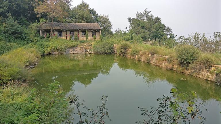 寺外的莲池